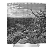 Black And White Image Of Tree Shower Curtain