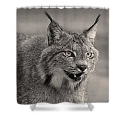 Black And White Lynx Shower Curtain