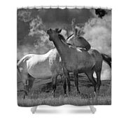 Black And White Photograph Of Montana Horses Shower Curtain