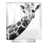 Black And White Portrait Of A Giraffe Shower Curtain