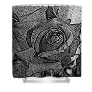 Black And White Rose Sketch Shower Curtain