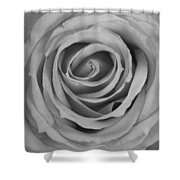 Black And White Spiral Rose Petals Shower Curtain