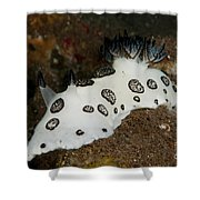 Black And White Spotted Budibranch Shower Curtain
