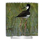 Black And White Stilt Shower Curtain
