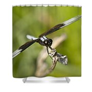 Black And White Widow Skimmer Dragonfly Shower Curtain