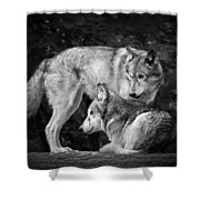 Black And White Wolves Shower Curtain