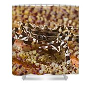 Black And White Zebra Crab On Fire Shower Curtain