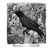 Black As The Night Shower Curtain