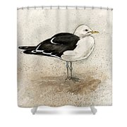 Black Backed Gull  Shower Curtain