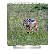 Black Backed Jackal Shower Curtain