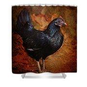 Black Bantam Chicken Shower Curtain