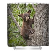 Black Bear Cub Hanging On Shower Curtain