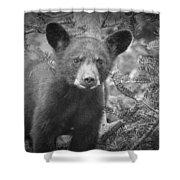 Black Bear Cub In A Pine Tree Shower Curtain