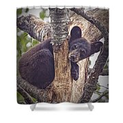 Black Bear Cub No 3224 Shower Curtain