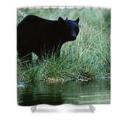 Black Bear Ursus Americanus Shower Curtain