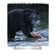 Black Bear With Salmon Carcass Shower Curtain