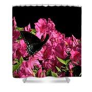 Black Beauty In Flight Shower Curtain