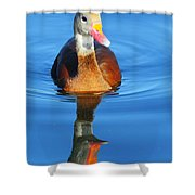 Black-bellied Whistling-duck Shower Curtain