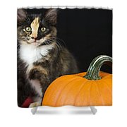 Black Calico Kitten With Pumpkin Shower Curtain