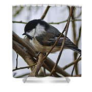 Black Capped Chick Shower Curtain