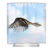 Black-capped Chickadee In Flight Shower Curtain