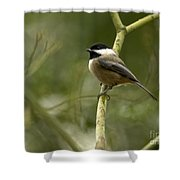 Black-capped Chickadee With Branch Bokeh Shower Curtain