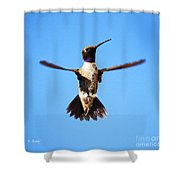 Black-chinned Hummingbird Flying Shower Curtain