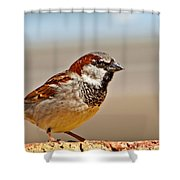 Black-chinned Sparrow Shower Curtain