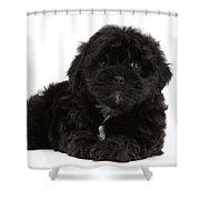 Black Cockerpoo Puppy Shower Curtain