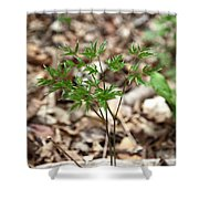 Black Cohosh Shower Curtain