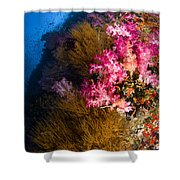 Black Coral And Soft Coral Seascape Shower Curtain