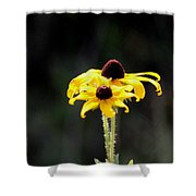 Black Eyed Beauty Shower Curtain