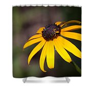 Black Eyed Susan With Young Bee Shower Curtain