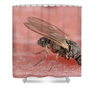 Black Fly Shower Curtain