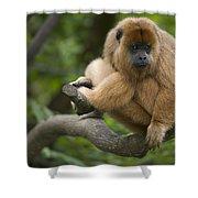 Black Howler Monkey Alouatta Caraya Shower Curtain