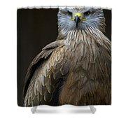 Black Kite 2 Shower Curtain