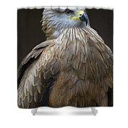 Black Kite 4 Shower Curtain