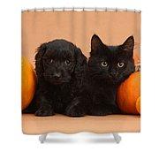 Black Kitten & Puppy With Pumpkins Shower Curtain