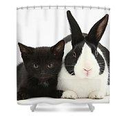 Black Kitten Dutch Rabbit Shower Curtain