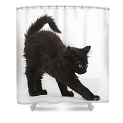 Black Kitten Stretching Shower Curtain