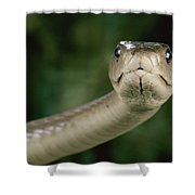 Black Mamba Dendroaspis Polylepis Shower Curtain