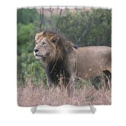 Black Maned  Lion Shower Curtain
