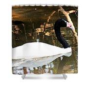 Black Neck Swan Shower Curtain