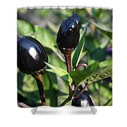 Black Olive Pepper Shower Curtain