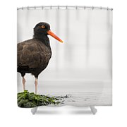 Black Oystercatcher  Martin Luther King Shower Curtain by Sebastian Kennerknecht