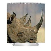 Black Rhinoceros Diceros Bicornis Close Shower Curtain