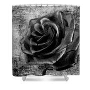 Black Rose Eternal  Bw Shower Curtain