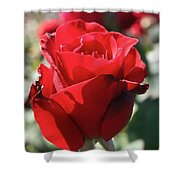 Black Rose Red Shower Curtain