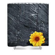 Black Schist Flower Shower Curtain by Carlos Caetano