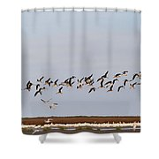 Black Skimmers In Flight Shower Curtain